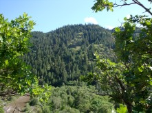 Oaks, pines and even firs make the dry region green