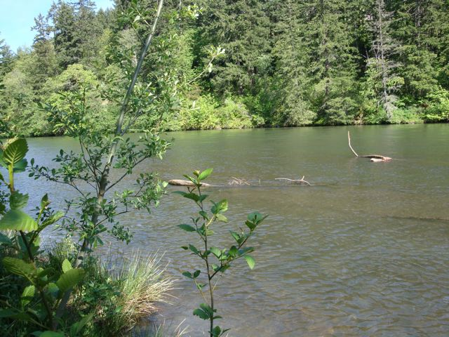 This picture of the Klickitat River has nothing to do with this post, other than it is the scene of my own little love affair with a beaver who followed me as I walked the river bank early one morning.