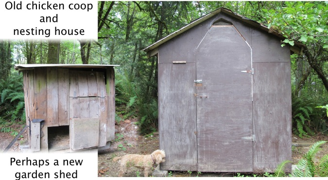 Old chicken coop and