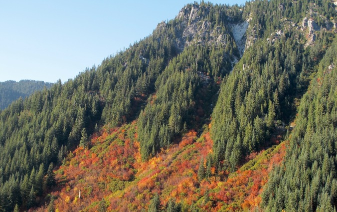How nature restores itself is evident in these areas of the Cascade were fire or logging left open areas. The first trees to grow back are quick growing decidious trees, vine maples, providing a palette of autumn color.