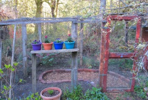 our 'chicken coop' garden