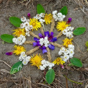 a little bontanical mandala I made at Grayland Beach of the flowers found amongst the dune grass.
